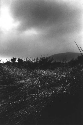 Fotograf: Eget fotoVærk  titel: Efter regn Værk  type: Fotografi Materiale: Barytpapir Størrelse: 17 x 25 cm Færdiggjort: 1997