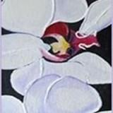 15.orkider